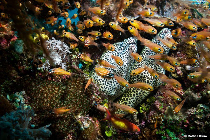 Biodiversity in Vamizi's coral reefs