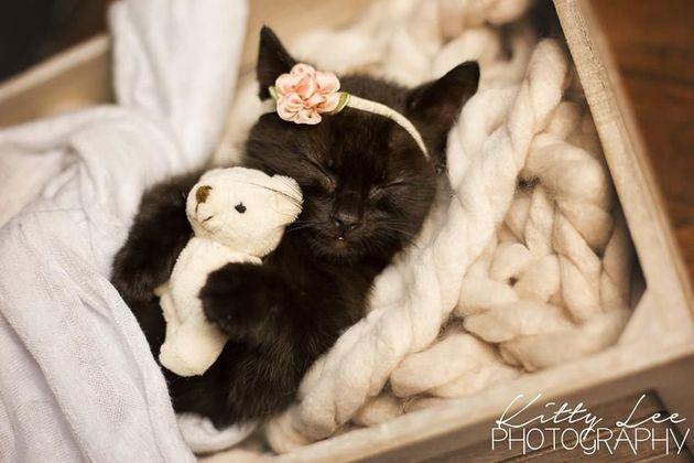 Esta é Luna, uma gatinha recém nascida que ganhou um ensaio