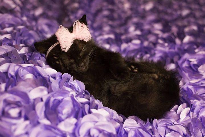 Luna makes napping look good.
