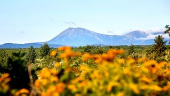 PATTEN, ME - AUGUST 27: Mount Katahdin is seen in a view from Route 159 in Patten, bordering the Katahdin Woods and Waters National Monument. (Photo by Derek Davis/Portland Press Herald via Getty Images)