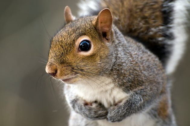 A New York man has been arrested after allegedly killing a squirrel with a bow and arrowforpurportedly...