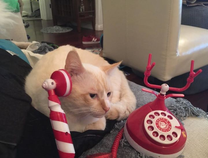 "A photo shared by Buddy's owner showed the cat pretending to call ""the local cat association"" to discuss the dangers of plast"
