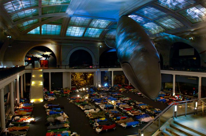 An image from a previous adult sleepover at the American Museum of Natural History, courtesy of AMNH.