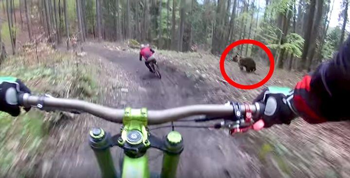 BEAR BEAR BEAR BEAR.