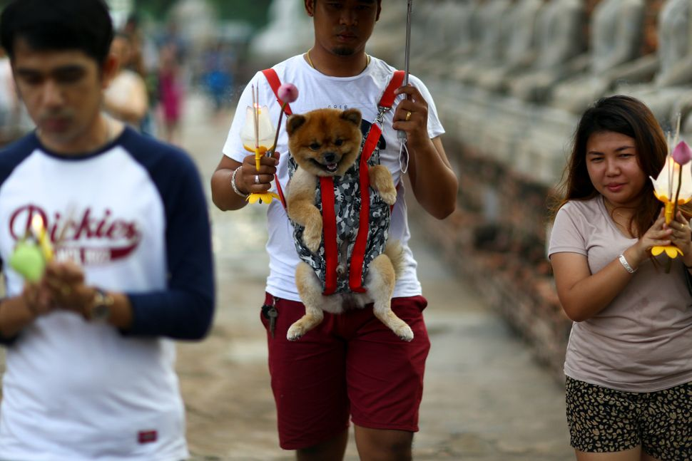 A man carries his dog as he prays during Vesak Day at Wat Yai Chai Mongkhon temple in Ayutthaya, Thailand, May 10, 2017.&nbsp