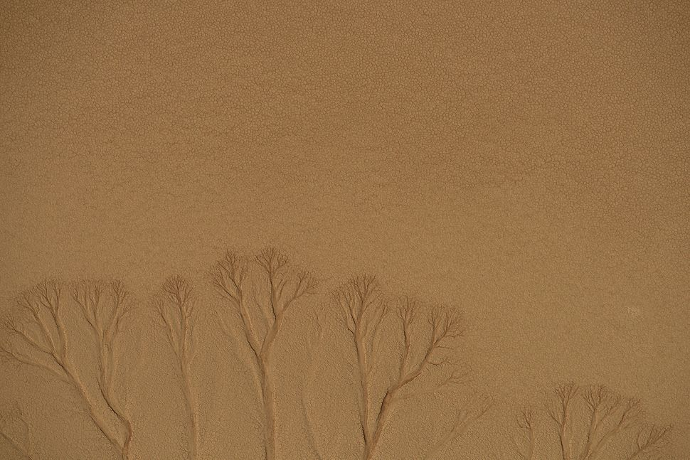 Resembling tree branches, dried up water runoff has left its scar on the Namib Desert in Namibia Africa on August 17, 2015. T