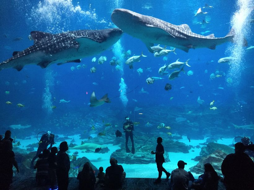 The Atlanta Aquarium is the world's largest and worth a visit.
