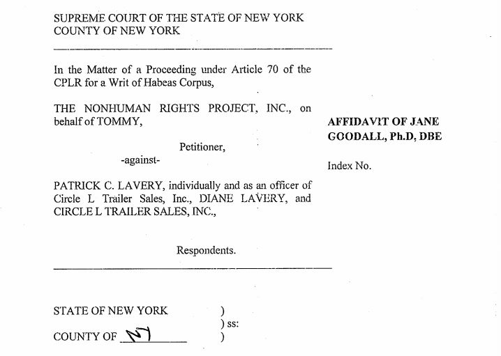 From Jane Goodall's affidavit in support of the NhRP's petition for a writ of habeas corpus brought on Tommy's behalf.