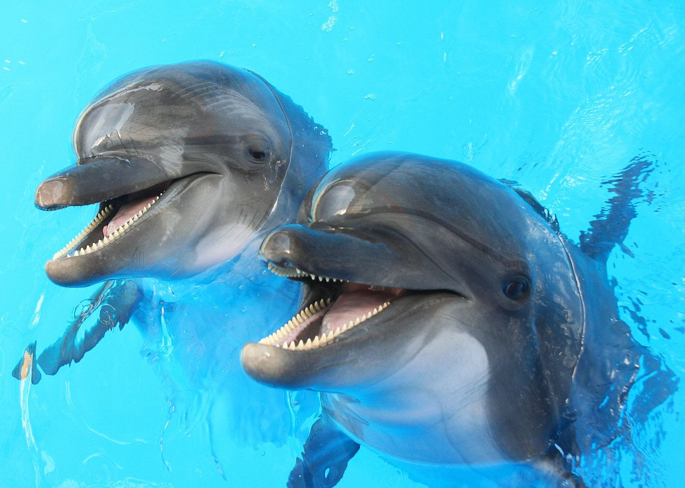 Two dolphins in a pool