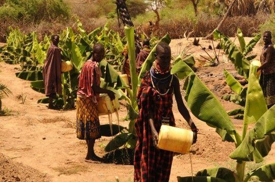 <em>Turkana women water their banana field from the nearby River Turkwel. </em>