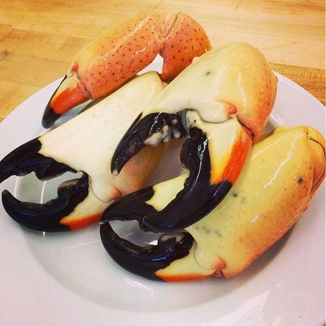 <p>Stone Crabs</p>