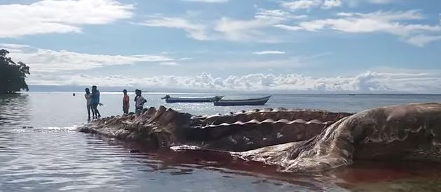 This Giant Dead Sea Creature Washed Up On An Island, And It's Freaking Everyone