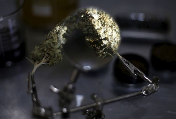 Much of the medical potential of cannabis remains unexplored.
