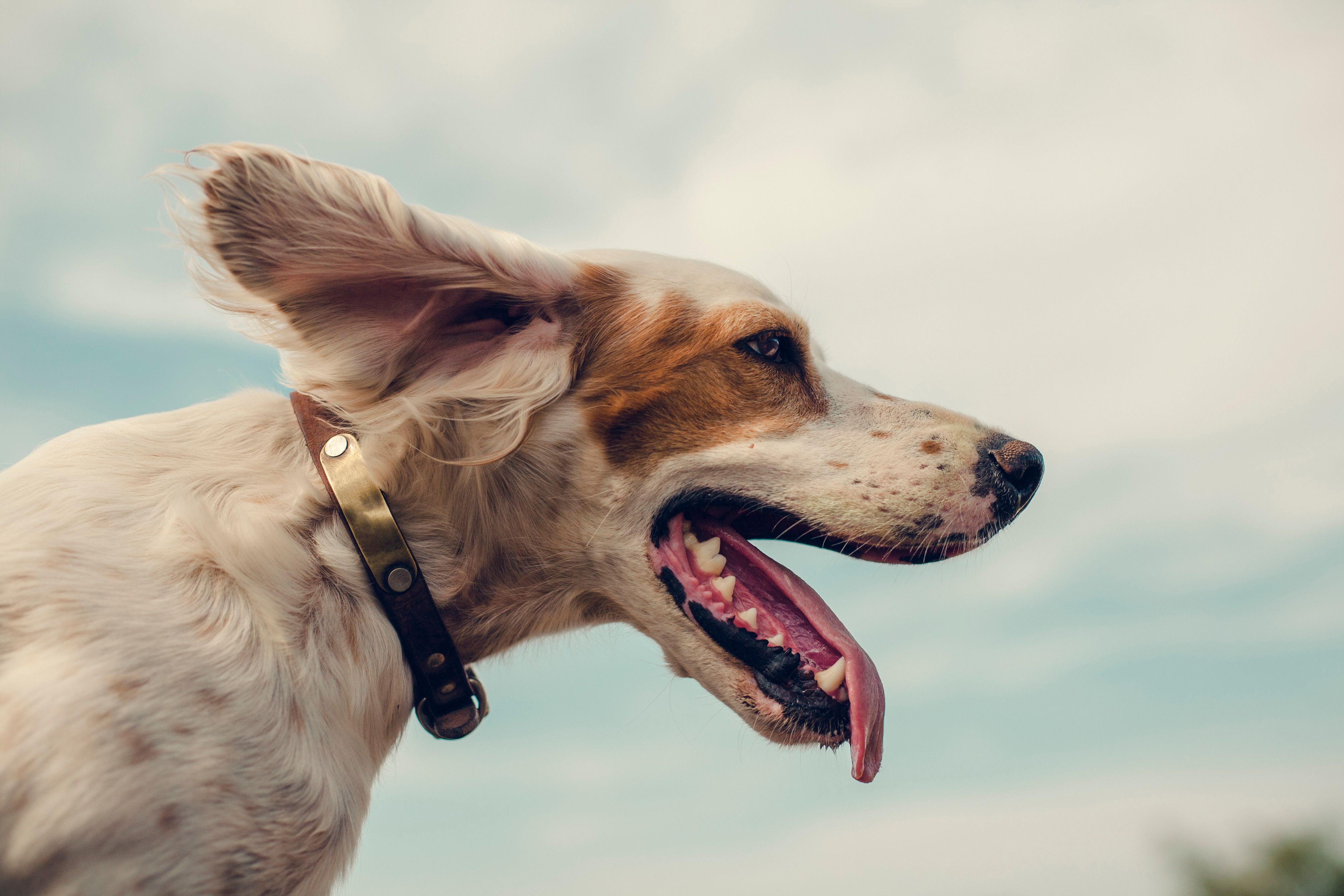 11 Reasons You Should Talk To Your Pet Instead Of A