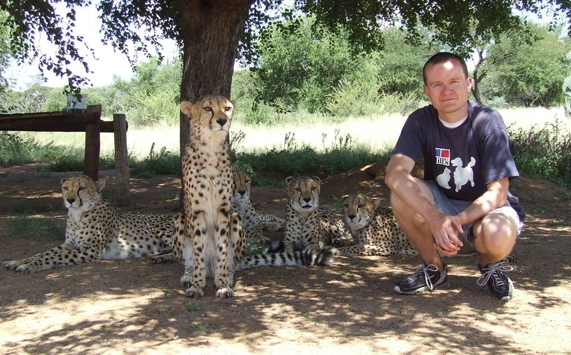 Working hands on with cheetahs - a dream come true for the author!