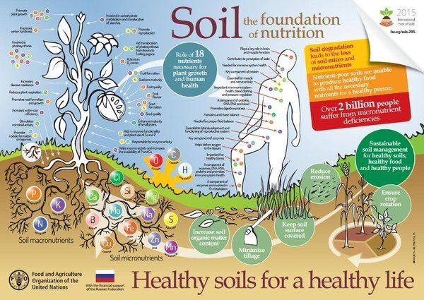 The nutrients in our soils are by nature linked to the nutrients we need for a healthy life: http://www.fao.org/soils-2015/re