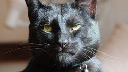 Este é Mr. Biggles, o gato que não faz questão de esconder o seu