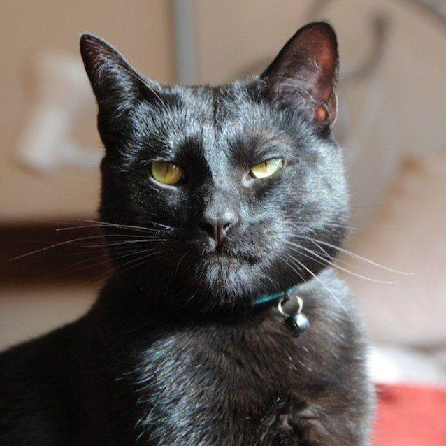 Adopting an Utter Badass Cat