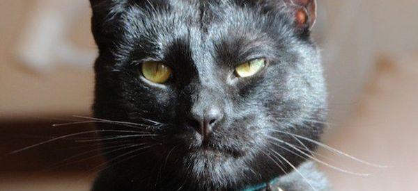 Now Everyone Wants An 'Utter Bastard Of A Cat'