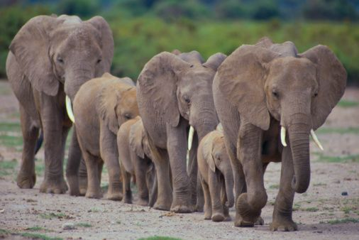Most people would agree that a world with elephants is a shared benefit