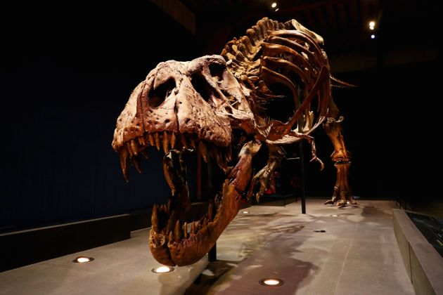 T. Rex Had The Biting Force Of Three Small