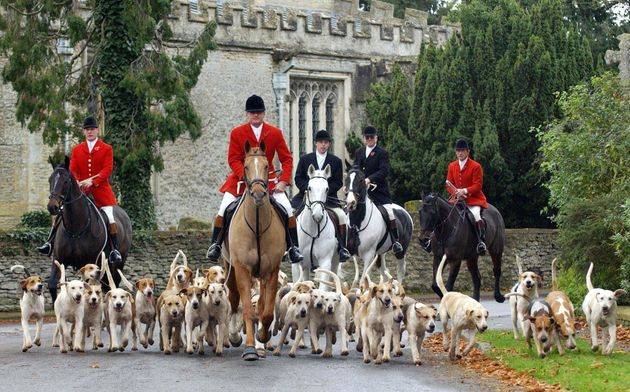 Fox hunting in its traditional form was banned under the Hunting Act