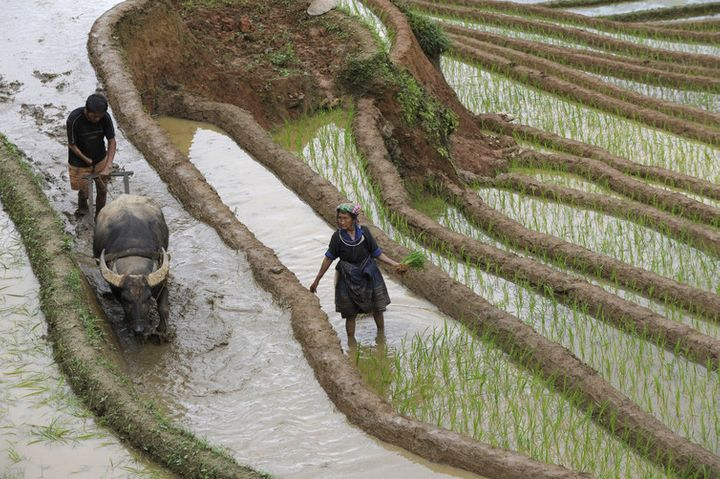 The Mekong, with its nutrient-rich sediment, is crucial for growing rice