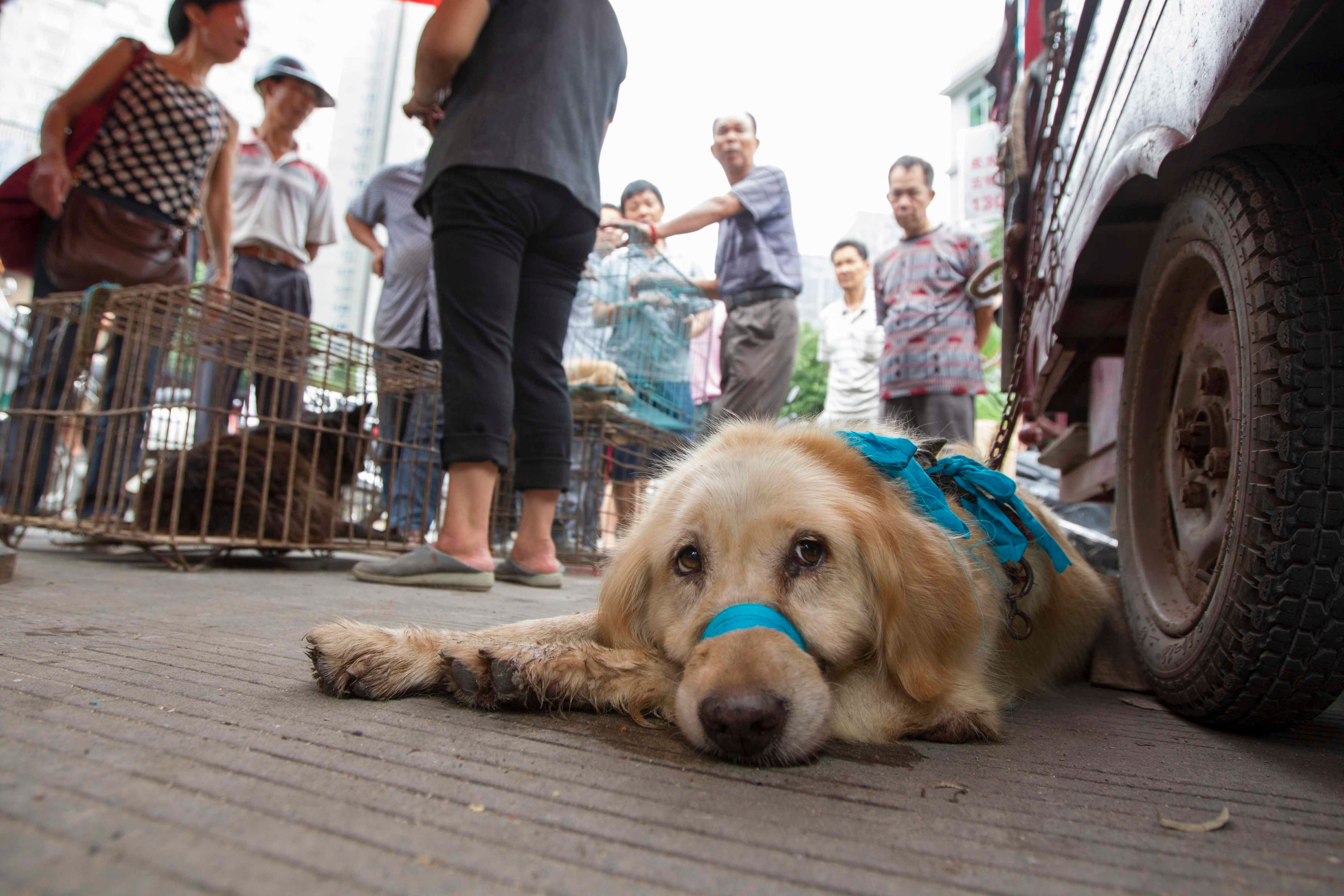 Dogs set to be killed at a market preceding the 2014 Yulin Lychee and Dog Meat Festival.