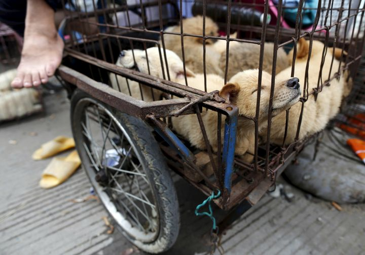Dogs for sale at the Yulin festival in 2015.
