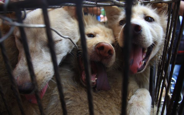 Three dogs in a cage at the Yulin festival in 2014.