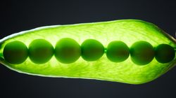 Scientists Say Plants Use Sound To Find Water And Ultimately