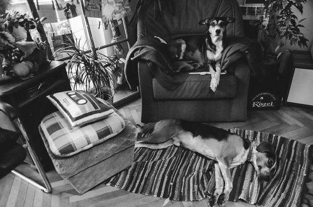 This Photographer Captured Her Dog's Last Days Without Even Realising