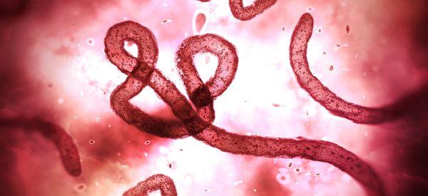 Tackling Ebola Outbreak In Remote Congo Presents Huge Challenge