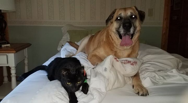 Ringer the cat and Chloe the dog are seen together after surviving the March house fire.
