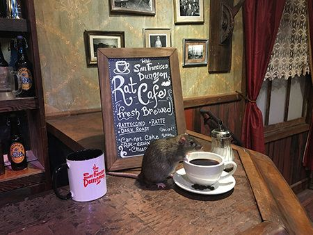Soon There Will Be A 'Rat Cafe' Where You Can Dine Among Rodent