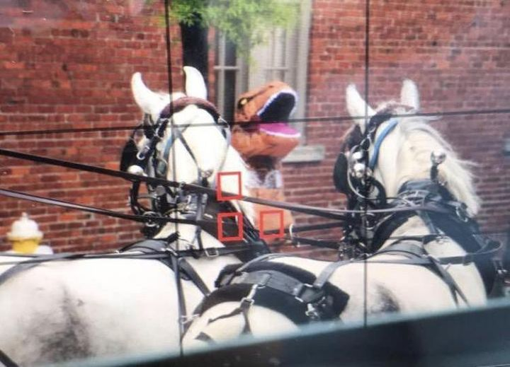A woman dressed as a Tyrannosaurus rex is facing charges after she allegedly startled a pair of carriage horses in downtown C
