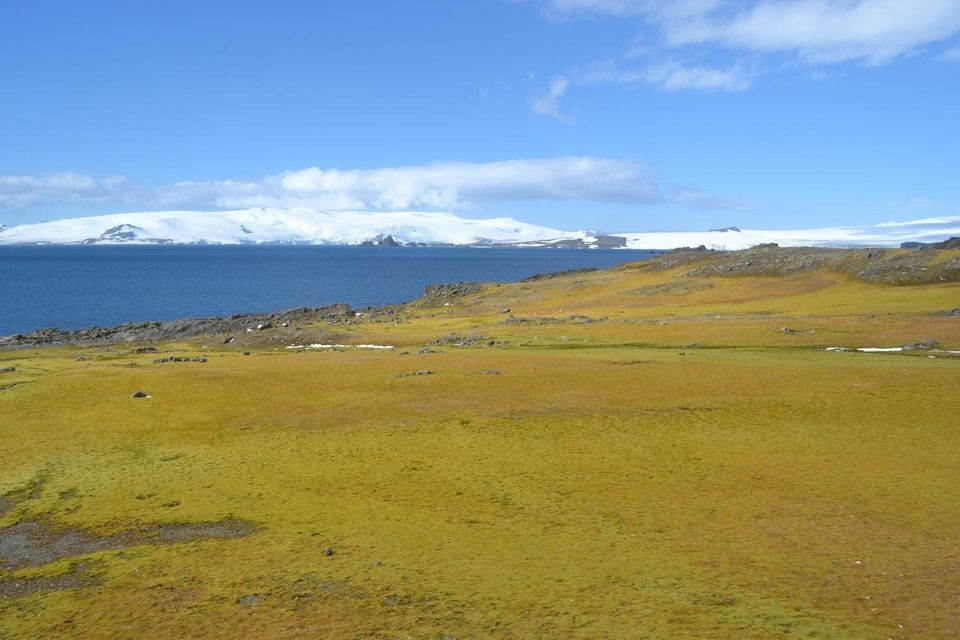 The sensitivity of moss growth in areas such as this one on Green Island, Antarctic Peninsula, to...
