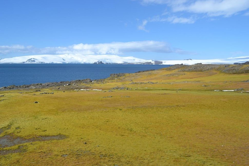 The sensitivity of moss growth in areas such as this one on Green Island, Antarctic Peninsula, to past temperature rises