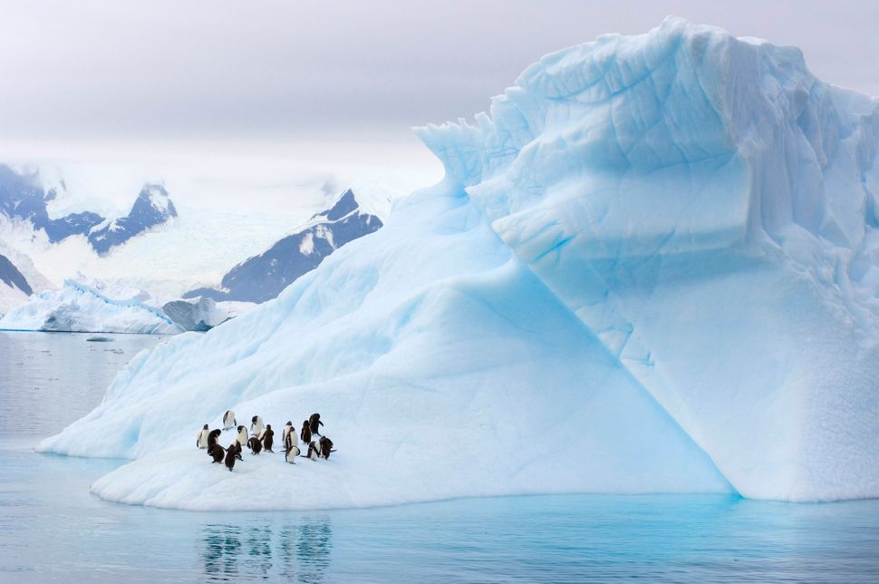 "Scientists say climate change is prompting ""unprecedented"" ecological change across the Antarctic Peninsula, which is home to"