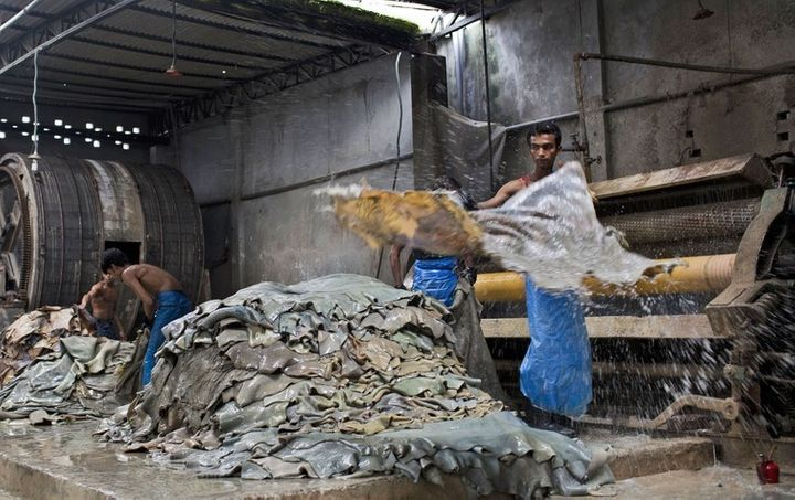 A Bangladeshi worker throws a washed rawhide onto a pile inside a factory at the highly polluted Hazaribagh tannery area on t