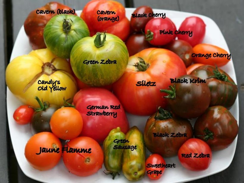 <em>The many faces of tomatoes all beautiful and delicious. </em>