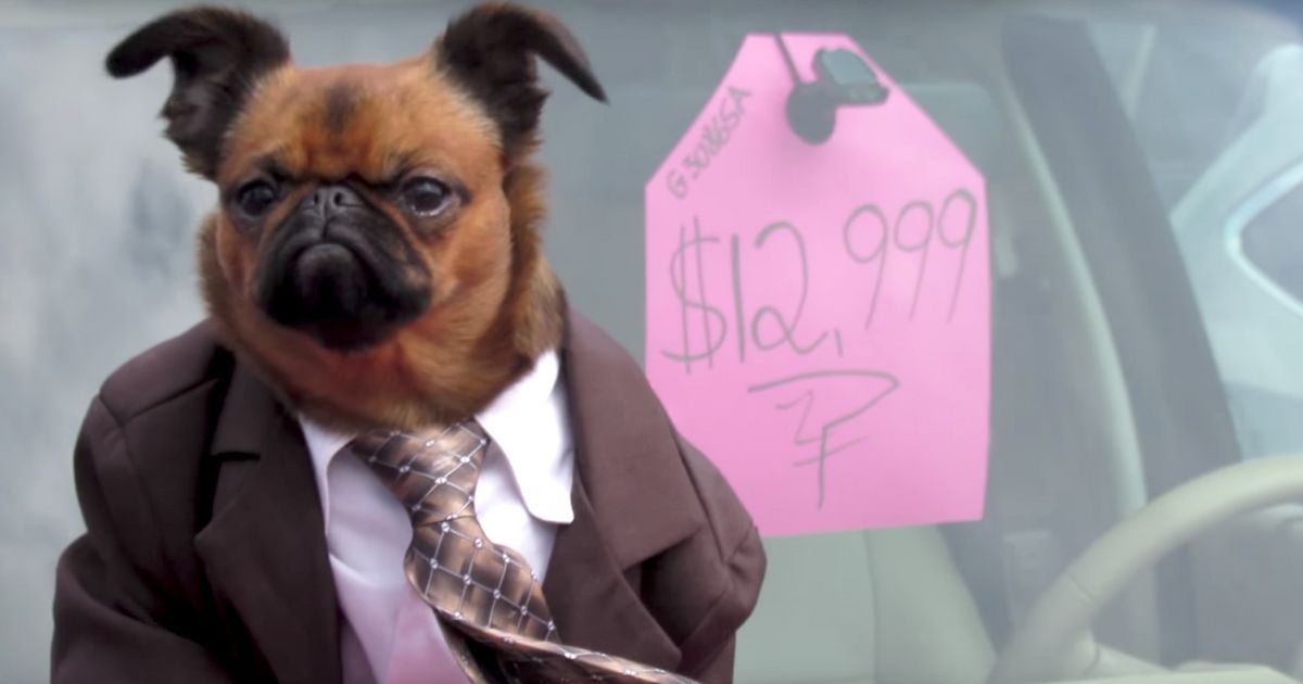 This Suit Wearing Dog Is The Best Used Car Salesman We Ve Ever Seen