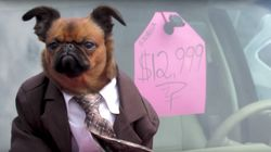 This Suit-Wearing Dog Is The Best Used Car Salesman We've Ever