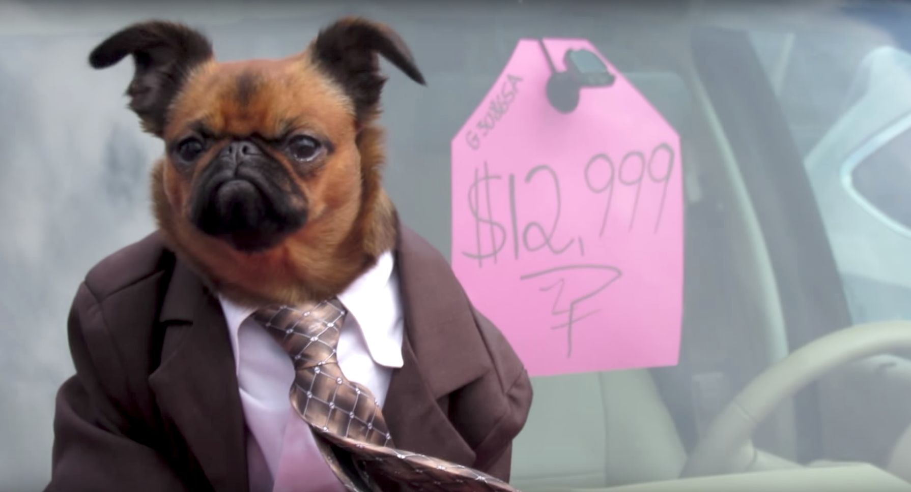 Car sales have gone to the dogs