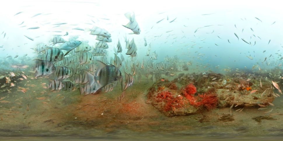 Divers visiting Gray's Reef National Marine Sanctuary are often surrounded by fish.