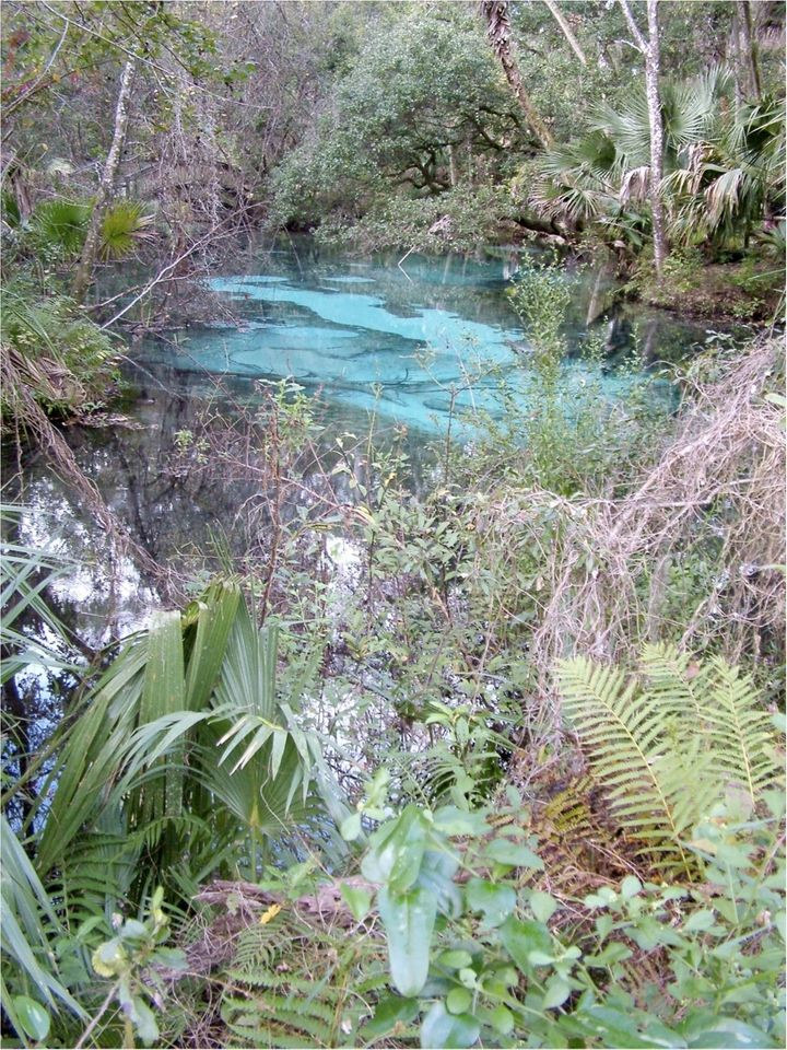 <p>A natural sinkhole in central Florida.</p>