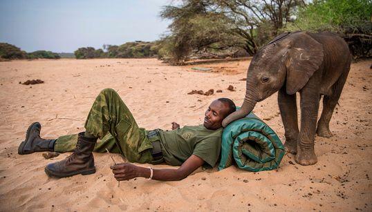 As fotos deslumbrantes de tribos quenianas trabalhando para salvar filhotes de