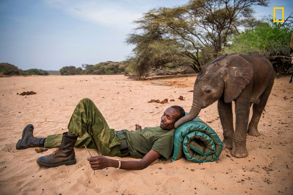 Samburu warriors found this baby trapped in a hand-dug well. When the elephant's herd didn't come back for her, t