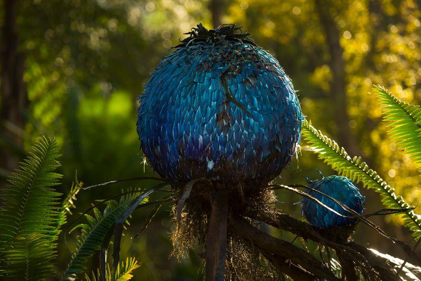 Puffball plant on Pandora - The World of Avatar at Disney's Animal Kingdom