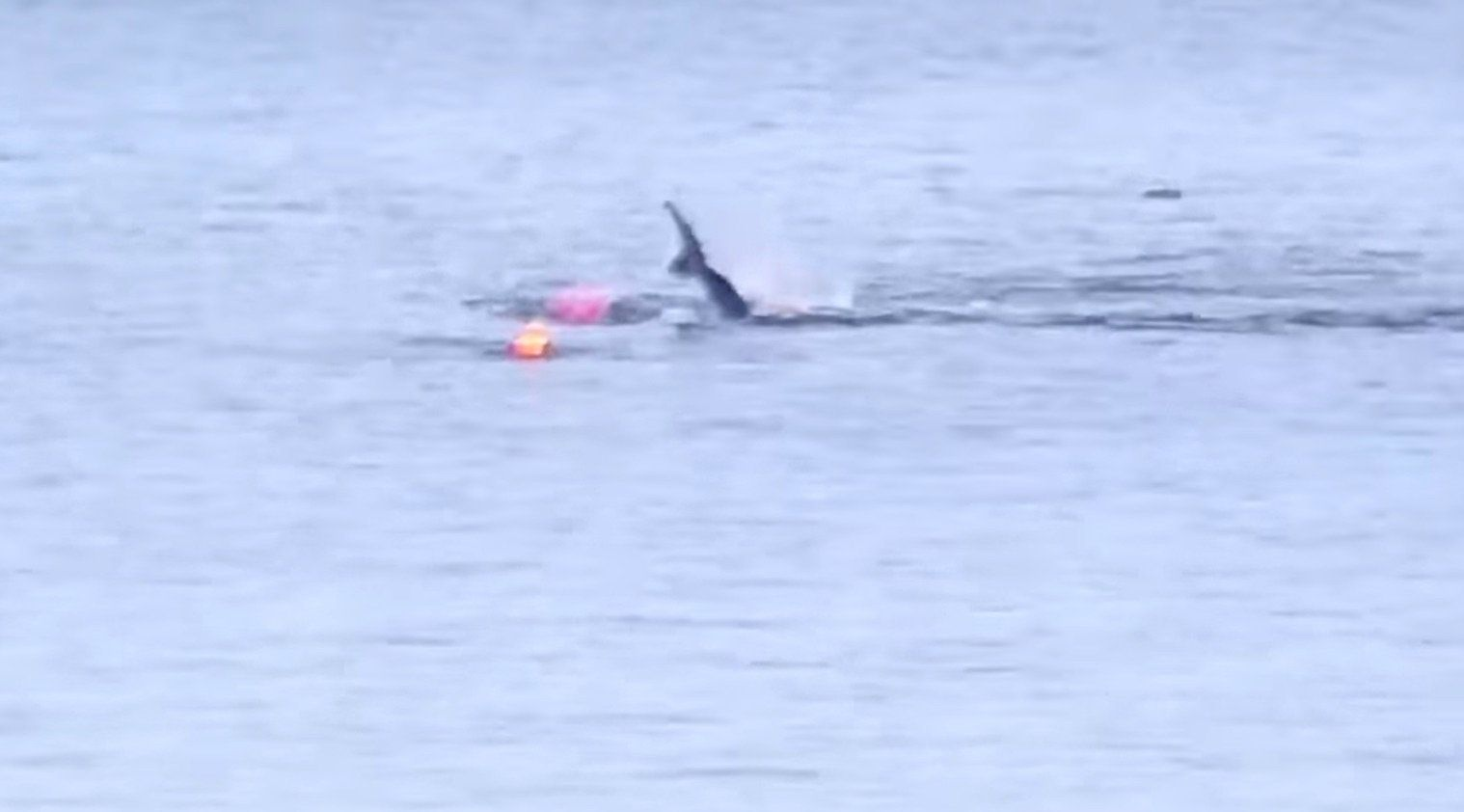 caught on video great white shark attacks kayak in monterey bay
